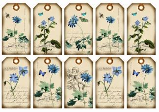 Blaublümchen